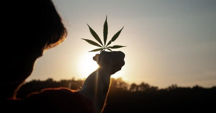 Cannabis Movers & Shakers: Greenlight Distribution, Petalfast, Tinley Beverage, Shryne Group, Ehave, NY Cannabis Control Board