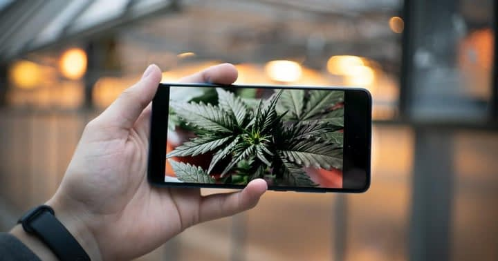 Leafly Launches iPhone App to Purchase From Cannabis Dispensaries Online