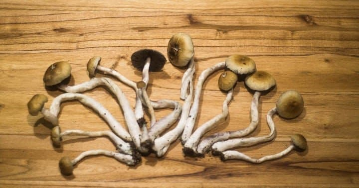 The DEA Seeks To Increase Federal Production Limits For Psilocybin And Marijuana Research